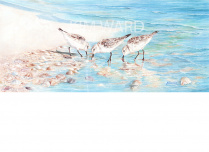 sandpipers-three.jpg